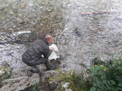 Poribljavanje Sutjeska (10)