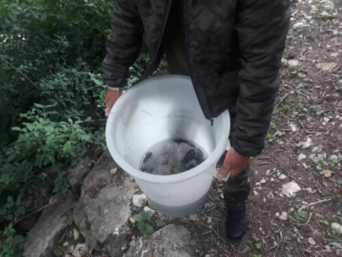 Poribljavanje Sutjeska (4)